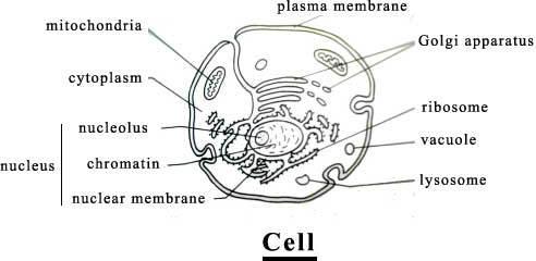 Cellnames_1